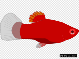 Red Aquarium Fish
