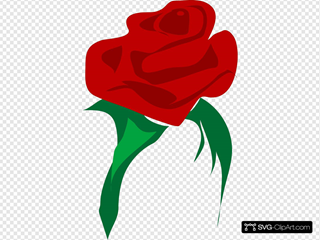 Rose Red Flower