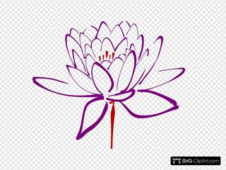 Purple Red Lotus