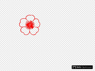 Red Buttercup Flower