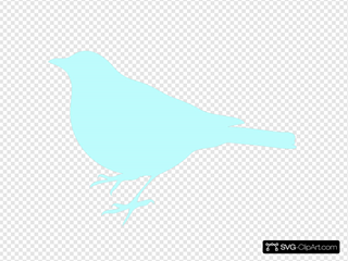 Sea Foam Blue Bird