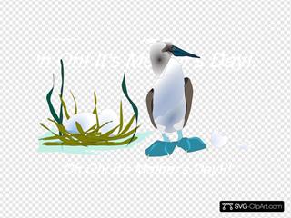 Sea Bird With Nest