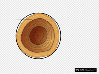 Circumference Of A Tree