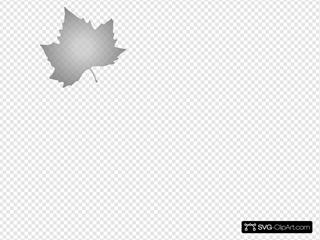 Grey Maple Leaf