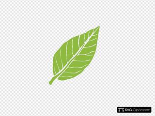 Lanceolate Leaf 3