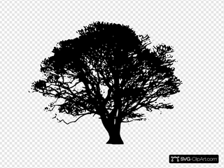 Black Tree Silhouette