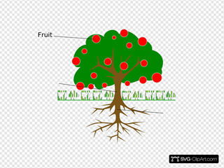 Labelled Tree