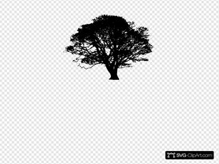 Oak Tree Giant