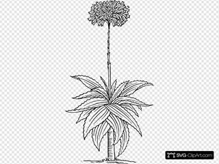 Aloe SVG Clipart