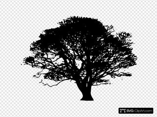 Tree, Family Reunion