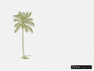Brown Palm Tree