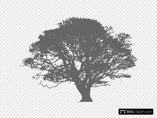 Tree Gray