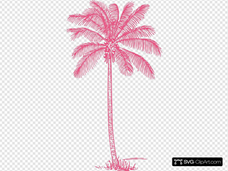 Coral Palm Tree