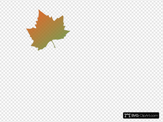 Kattekrab Plane Tree Autumn Leaf Clipart