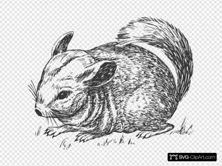 Grayscale Chinchilla SVG Clipart
