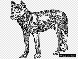 Dingo Dog SVG Cliparts