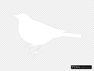 White Bird Black Back
