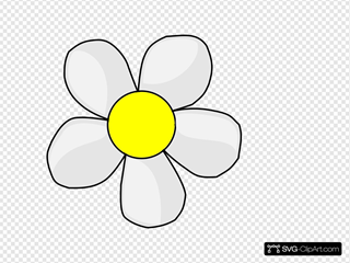 Traditional Daisy Flower