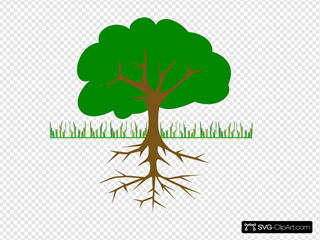 Tree Branches And Roots