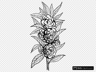 Black And White Floral SVG Clipart