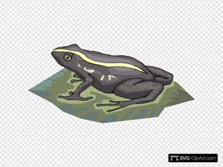 Black And Yellow Frog On A Lily Pad
