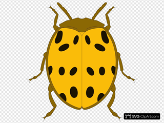 Yellow And Black Spotted Beetle