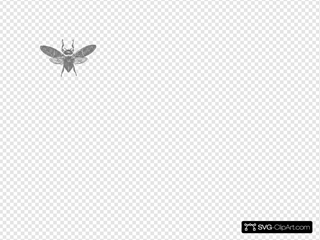 Bee Image Placeholder