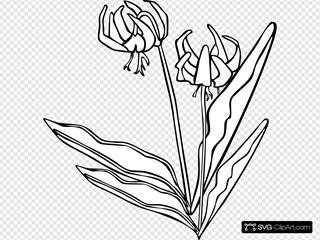 Yellow Avalanche Lily Coloring Page