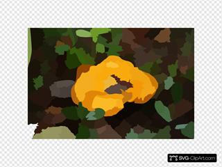 Yellow Cantarell Mushroom